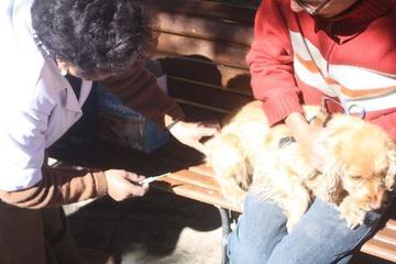 Vacunación canina es el 6 de septiembre