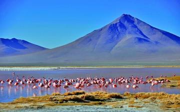 Alertan que 20 de las  22 áreas protegidas de Bolivia están en riesgo