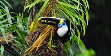 Más del 50 % de especies de árboles de la Amazonia están en peligro