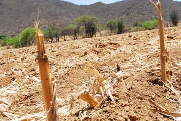 Advierten que habrá escasez de alimentos en 2016 por la sequía
