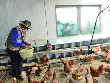 Comienza la venta de huevo de la granja municipal de Tamari