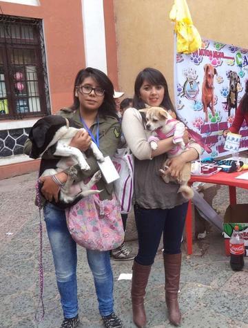 Se cumple la feria de  adopción de mascotas