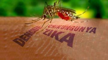 América Latina acuerda plan para combatir al virus del Zika