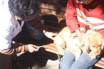 Reportan dos casos de rabia canina en la ciudad de Potosí