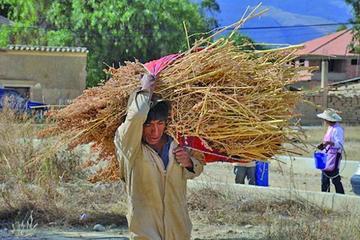 Uyuni declara emergencia por destrucción de quinua