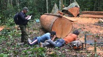 Encarcelan a tres peruanos por explotar madera