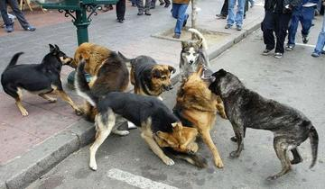 Bolivia registra más de treinta casos de rabia canina este 2016