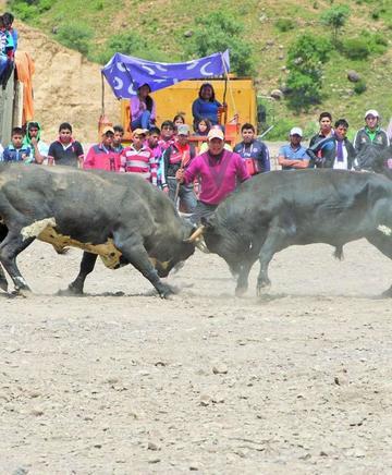 """Inicia el """"Toro Tinku"""" en San Pedro de Buena Vista"""