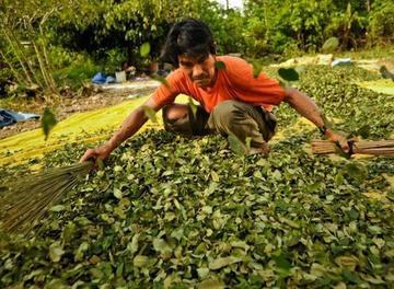 Cocaleros de Los Yungas se declaran en emergencia