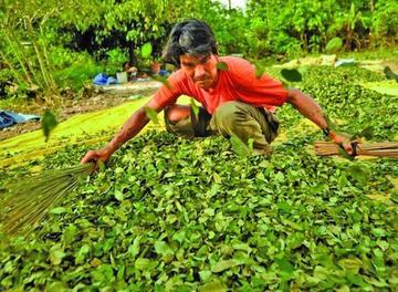 Los cocaleros del Trópico aceptan que tienen 28 mercados ilegales