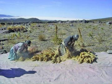 Casi 34 mil familias potosinas fueron afectadas por El Niño