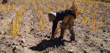 Villazón y Quetena son golpeadas por fuerte sequía en el Departamento