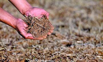 Reportan migración en Potosí por sequía que afecta al agro