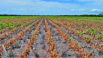 Reportan deterioro de agricultura local