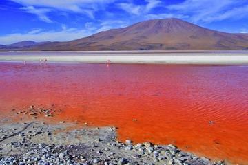 Sernap: la laguna Colorada no se secará y se prevé un proyecto