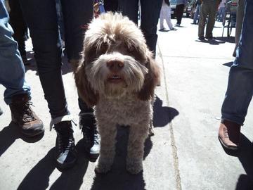 Los casos de rabia canina se incrementan hasta 32