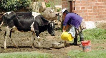 Lecheros empiezan a desertar por sequía y bajos precios