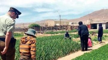 Descubren explotación de tres menores bolivianos en Chile