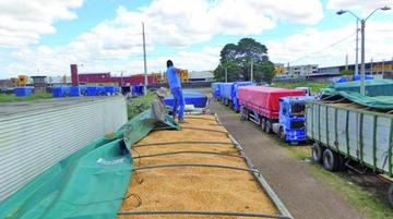 Santa Cruz: Decomisan seis camiones con maíz de contrabando