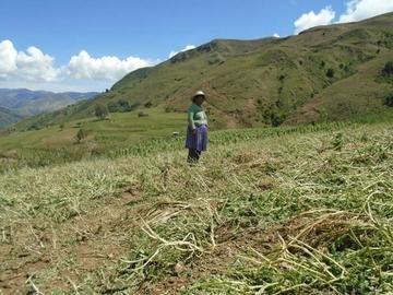 El granizo destruye cultivos en el municipio de Toro Toro