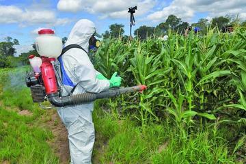 Gobierno informa que no proveerá de químicos a todos los agricultores