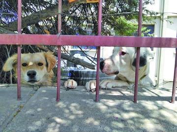 Detectan el segundo caso de rabia canina en Potosí
