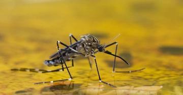 Alertan sobre los riesgos de contraer fiebre amarilla