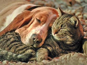 En la ciudad de La Paz sancionarán abandono y mal cuidado de mascotas