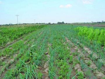 Betanzos quiere producción ampliada de la agricultura