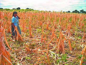 Pobladores de Puna piden ayuda por daños por sequía