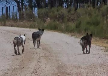 Reportan 7 casos de rabia canina en el Departamento