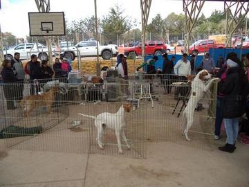 Exhiben variedad de razas de canes