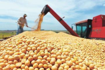 Productores prevén menor producción de soya este año