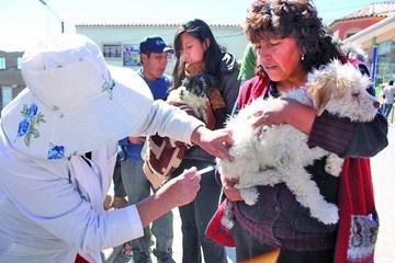 Alistan insumos de vacunación canina