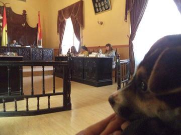 Una nueva ley municipal multa el abandono y maltrato animal