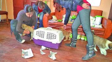 Fedjuve rechaza ley de tenencia de animales y Concejo la avala