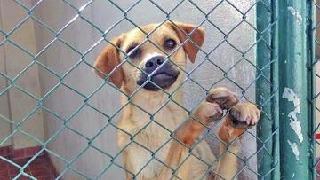 Suman tres casos positivos de rabia canina en Potosí