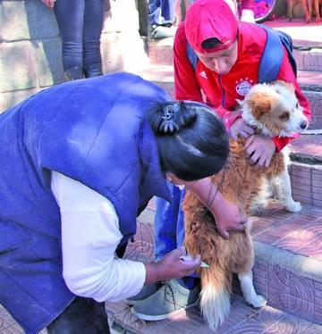La campaña antirrábica canina llega al 82 % en su primer día