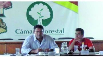 Descartan tala ilegal de madera en el norte del Departamento de La Paz