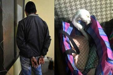 La Policía aprehende a un presunto traficante de flamencos rosados