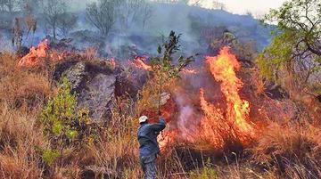 Un incendio afecta a la serranía de Sama en el Departamento de Tarija