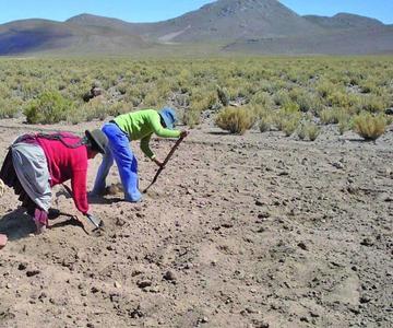 Descartan peleas por la siembra de la quinua