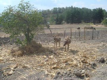 La escasez de agua afecta a las poblaciones de Potosí