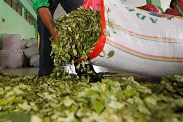 El TCP declara legal los artículos que suben los cultivos de hoja de coca