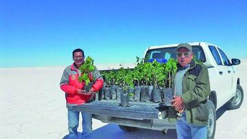 Concretan plantaciones de la vid en las orillas del salar
