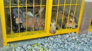 Rescatan a 36 perros víctimas de maltrato de un domicilio en La Paz