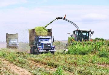 El agro se recupera y calcula un crecimiento del 3 por ciento para 2018