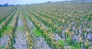 Dan a Potosí Bs 24.5 millones para atender cultivos dañados