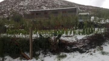 Granizada destruye cultivos de durazno en una comunidad