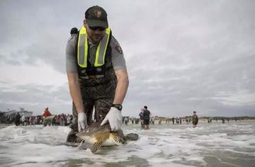 Liberan a casi 400 tortugas aturdidas por el frío en Texas